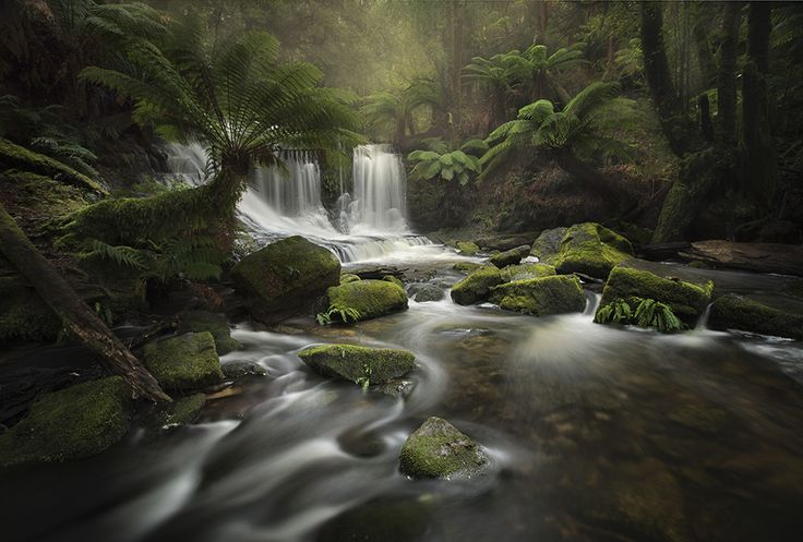 Kath Salier (Australia) took out second place for her folio submission, including this stunning photo taken at Mount Field National Park, Tasmania. Image Credit: Kath Salier / www.internationallandscapephotographer.com