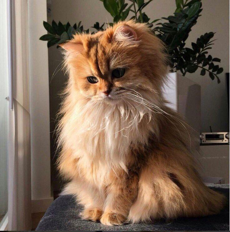 они сразу, самые пушистые котята в мире фото думал это