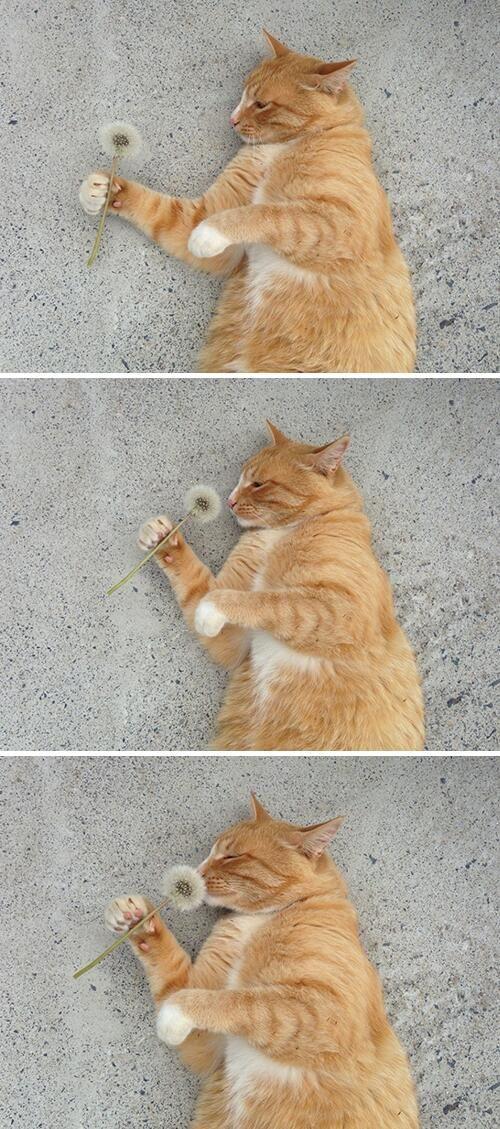 Even cats love dandelions