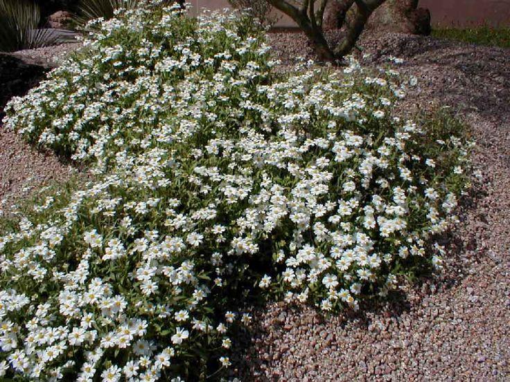 1000 Ideas About Year Round Flowers On Pinterest Shade Perennials Flowers Garden And Flower