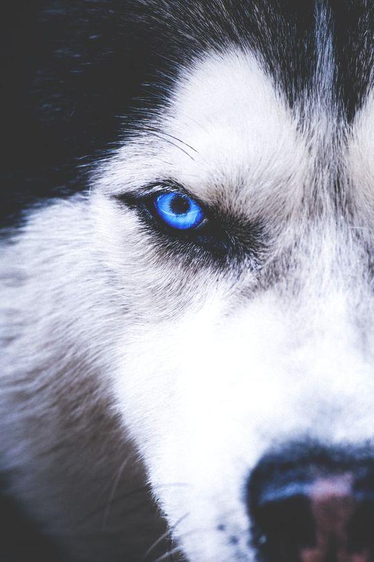 imposingtrends:  Husky | ImposingTrends | Facebook | Instagram