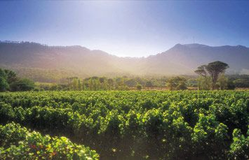 The Steenberg Winery & Luxury Hotel   Cape Town