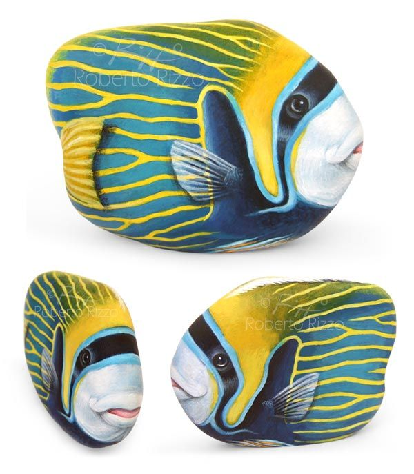 Emperor Angel Fish | Acrylic on Rock | Available on www.RobertoRizzoArt.etsy.com