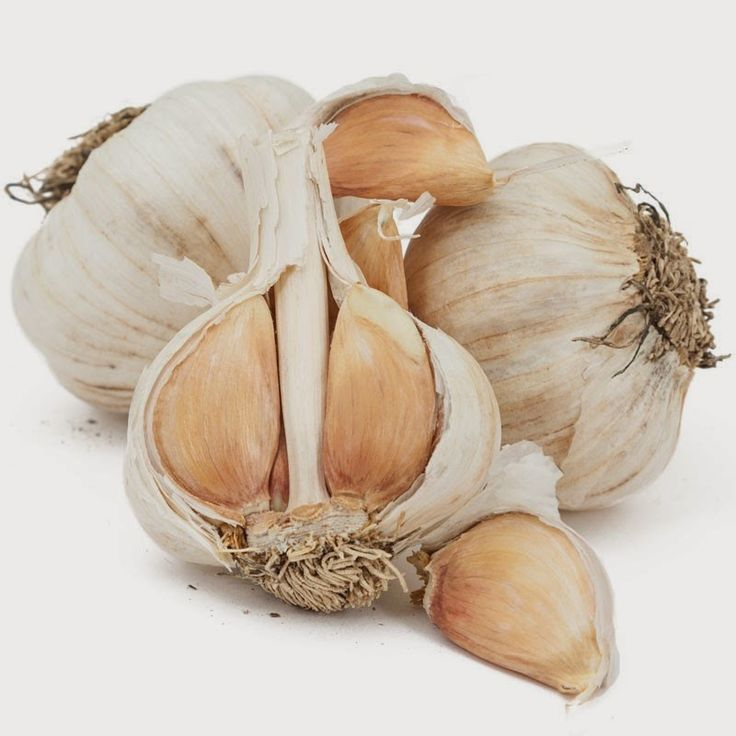 Back to the Basics!: Growing Organic Garlic