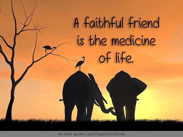 A faithful friend is the medicine of life.  #faithful #friend #friendship #life #medicine #quotes