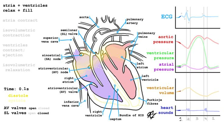 Heart - 72 bpm #animated