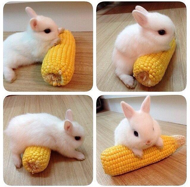 Bunny and corn