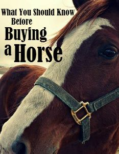 What You Should Know Before Buying a Horse | Savvy Horsewoman