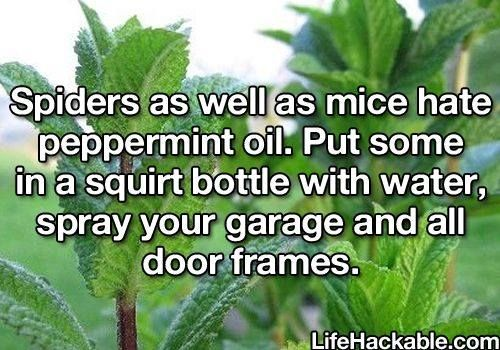 Another pinner wrote:  Interesting, a friend puts pepermint oil on cotton balls in the corners of her son's outside playhouse to keep the spiders away. We sprayed peppermint oil last November and haven't seen any spiders since and before we were running a spider den - this hack worked for us.
