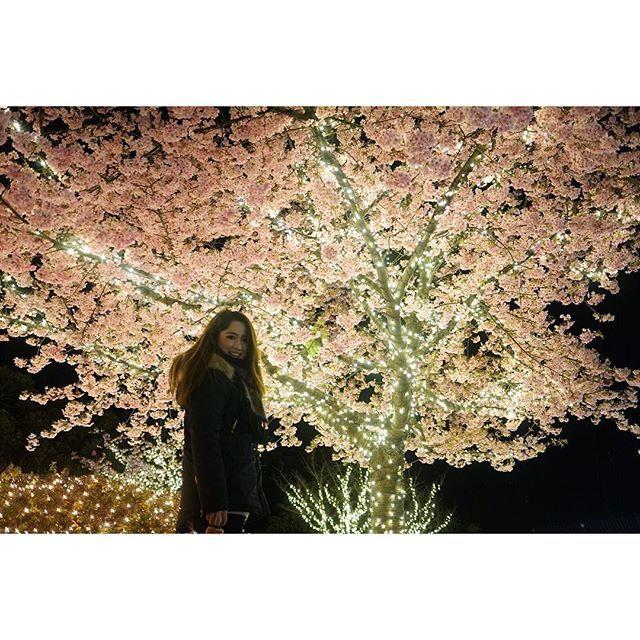 【rio86kt】さんのInstagramをピンしています。 《先週末の雪とイルミネーションと桜の江の島😳💗なんでこの時期に桜!?異常気象!?とかおもったら河津桜でした🌸桜が一番好きなお花!同時に切なくもあるけどほっこりする。カメラ欲しいなー📸#雪 #イルミネーション #桜 #冬 #春 #四季 #日本 #景色 #夜景 #夜桜 #一眼レフ #カメラ #デートスポット #ドライブ #おでかけ #snowday #view #japan #japanesegirl #cherryblossom #flowers #shiny #cute #goodvibes #happy #view #driving》