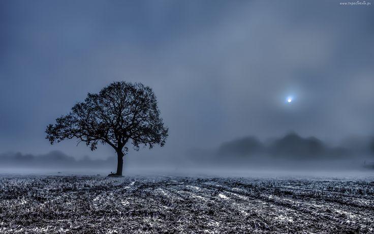 Pole, Drzewo, Mgła