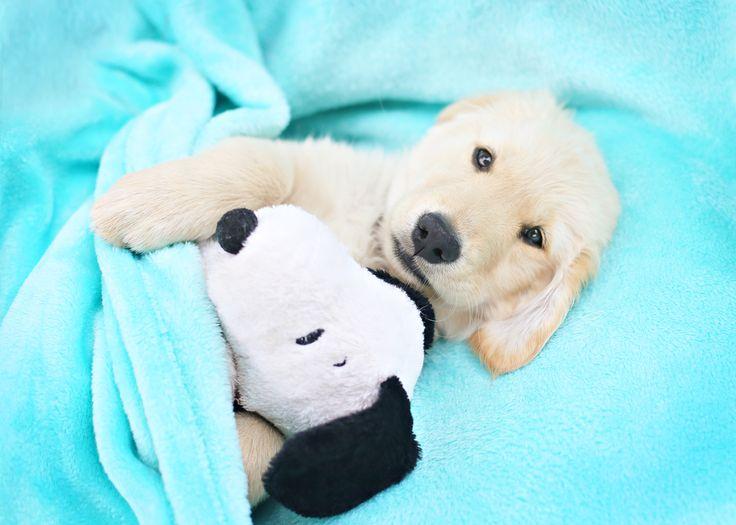 best 25 puppy photo ideas ideas on pinterest dog photos