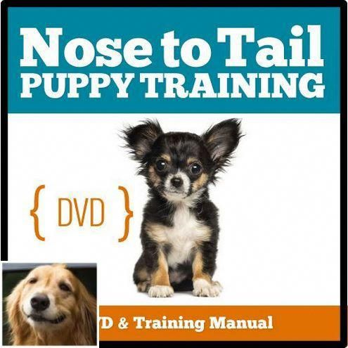 Stop Dog Jumping And Basic Dog Training Check The Pin For Many