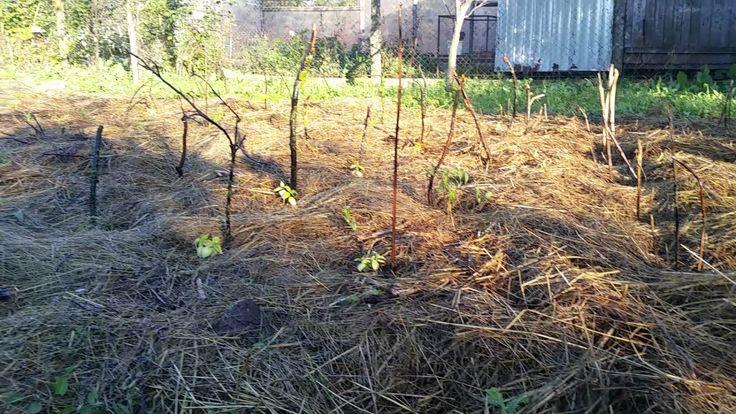 A Tiny Farm - Current Situation -Farm Walkaround tour - The Nursery