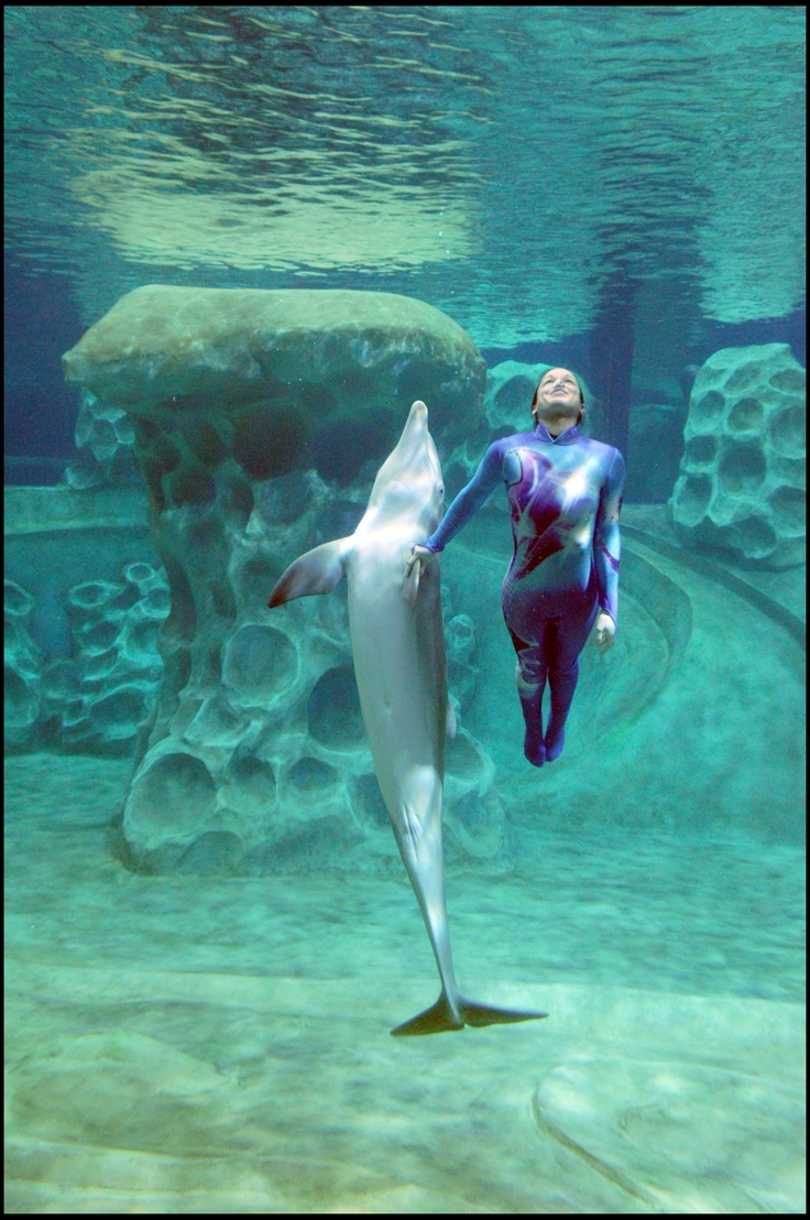 see  touch  u0026 feed one of our  bottlenosedolphin stars of the at u0026t dolphin tales show with our