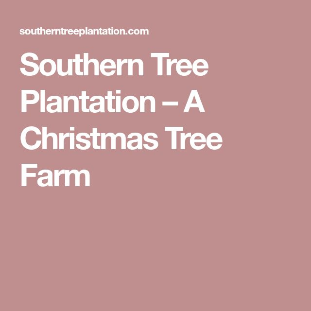 Southern Tree Plantation – A Christmas Tree Farm