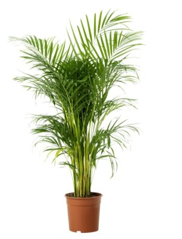 Potted palms give the kino a bit of a Casablanca feel. http://www.dancefilmskino.com