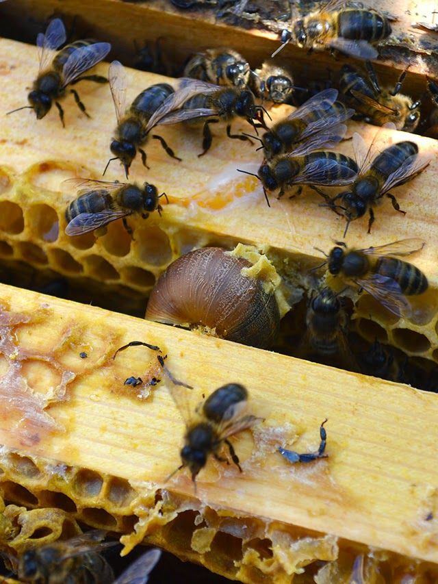 334 best images about for the love of bees on for Artificial bees for decoration