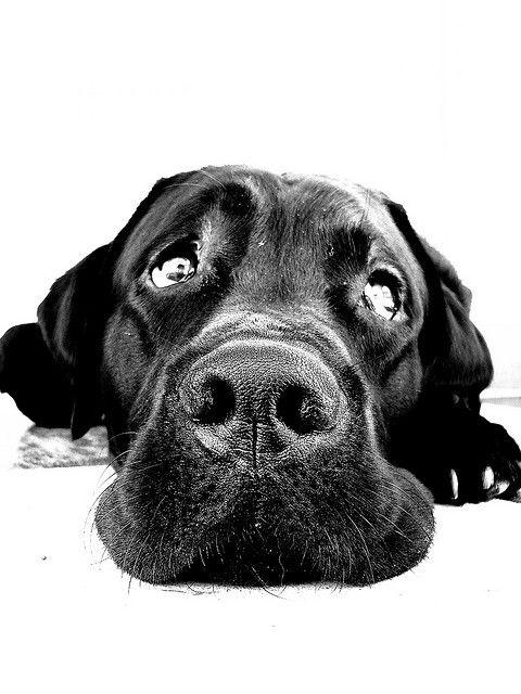 Wide angle dog photography...