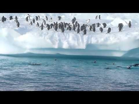 Penguin Fun in Antarctica