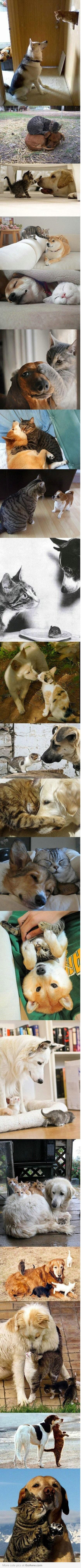 who says dogs and cats can't get along.          =^..^=
