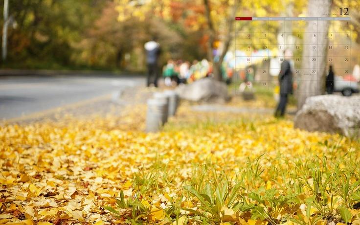 가을이 만들어낸 색... 길을 메우다...