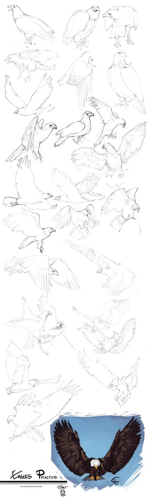 Another animal practice. This time are..eagles! Done while having nice conversation -as everyday! - with on skype. (Yes! I love working while talking with someone ._. ~) You can find the previos p...