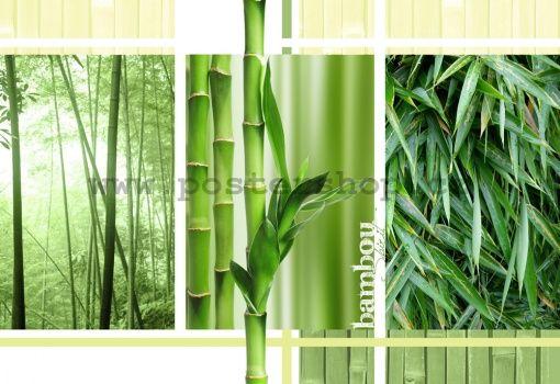 Fototapeta - Bambus