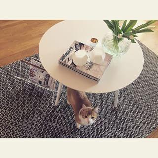Asså vårt nya soffbord  #IKEA #lövbacken #inreda #interiör #inredning #interior4all #inspiration #katt #björn #tulpaner #skultuna1607 #plaza #elleinterior