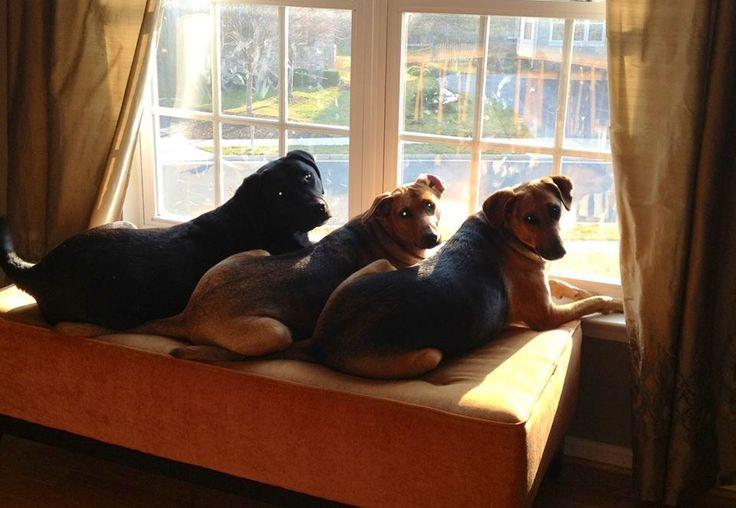 картинки животные ждут своих хозяев солнце