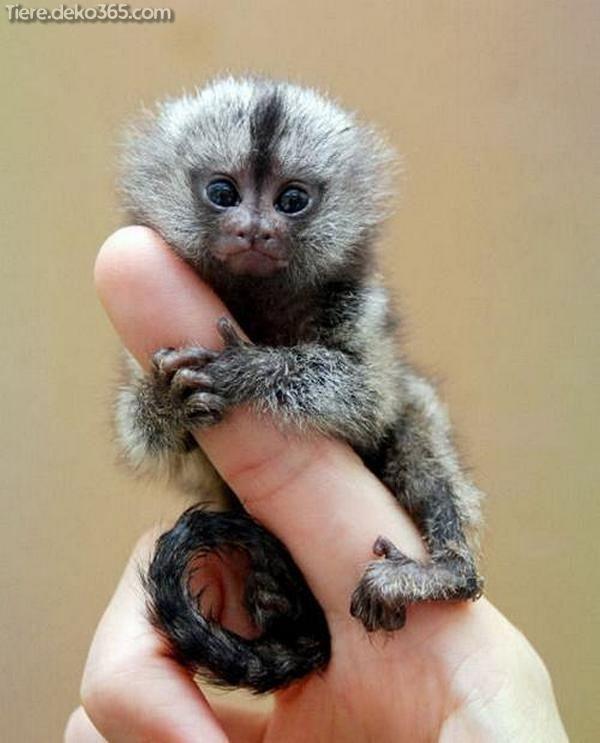 Entzuckende Kleine Tiere Die In Ihrer Handflache Halten Susseste