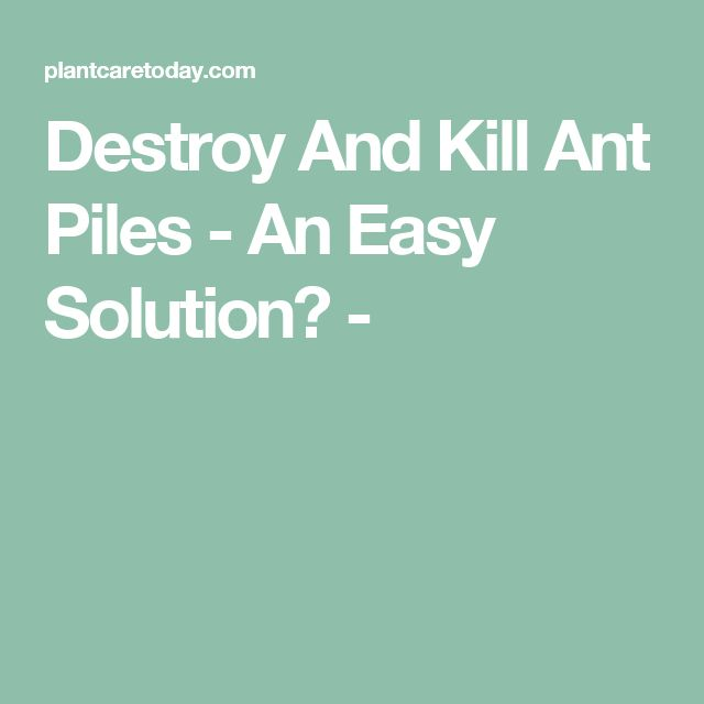 Destroy And Kill Ant Piles - An Easy Solution? -