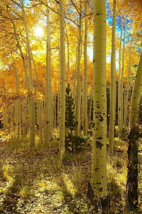 17 Breathtaking Places To Go Soul Searching In The Colorado Rockies – Gossip News Line