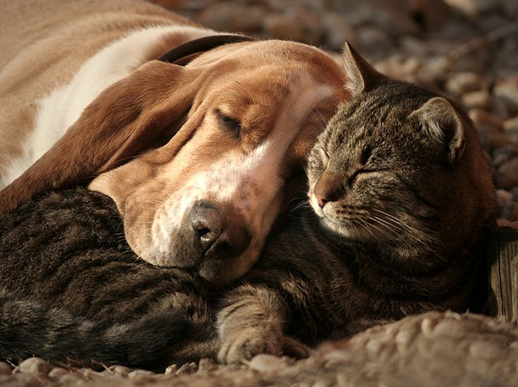 Isn't this the cutest?!  Cat Pillow, Dog Blanket.  Photographer:  Szilvia Pap - Kutasi