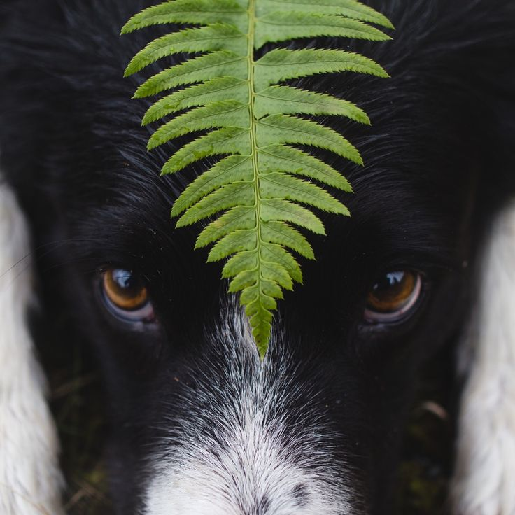 Momo is a border collie. He's hiding in all of these photos. Find Momo is a project by Andrew Knapp...