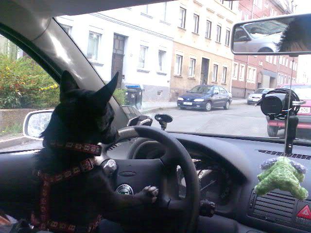 Spitz-Jack Russel Mischling Sanny Platz da! Der fliegende Hund und ich wollen hier durch!!! Hundename: Sanny / Rasse: Spitz-Jack Russel Mischling      Mehr Fotos: https://magazin.dogs-2-love.com/foto/spitz-jack-russel-mischling-sanny-2/ Bild, Hunde