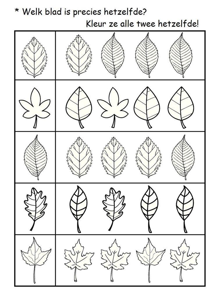 * Welk blad is hetzelfde?