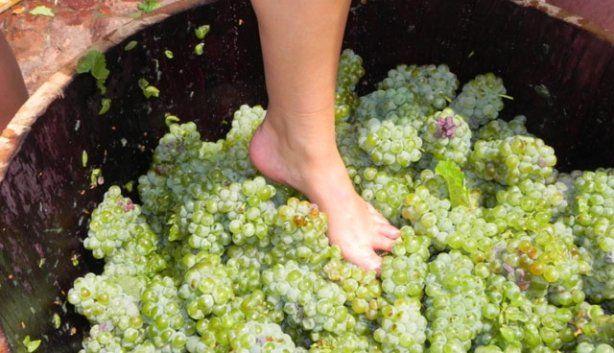 Grape Stomping Festival | What to Expect at the 2014 Delheim Start of Harvest Festival