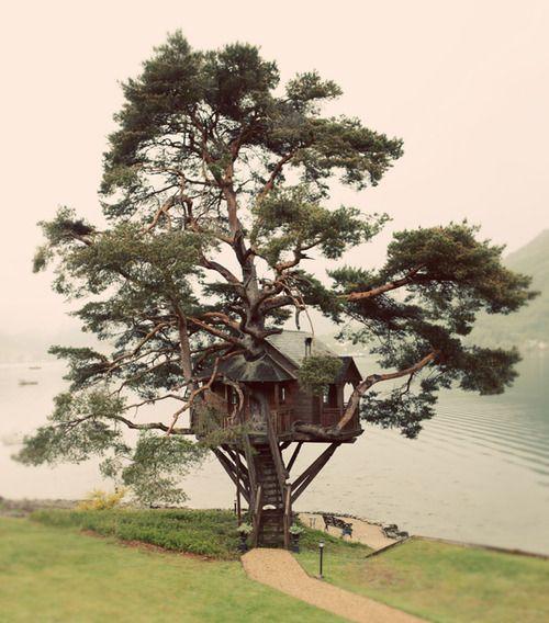 Amazing tree house! I want one!: Dreams Home, Dreams Houses, Swiss Families Robinson, Trees Houses, Lakes Houses, Treehouse, Trees Home, Sweet Home, Kid