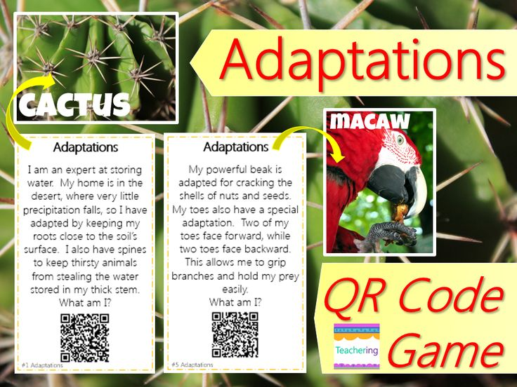 Awesome Animal Adaptations -Word Search *FREEBIE