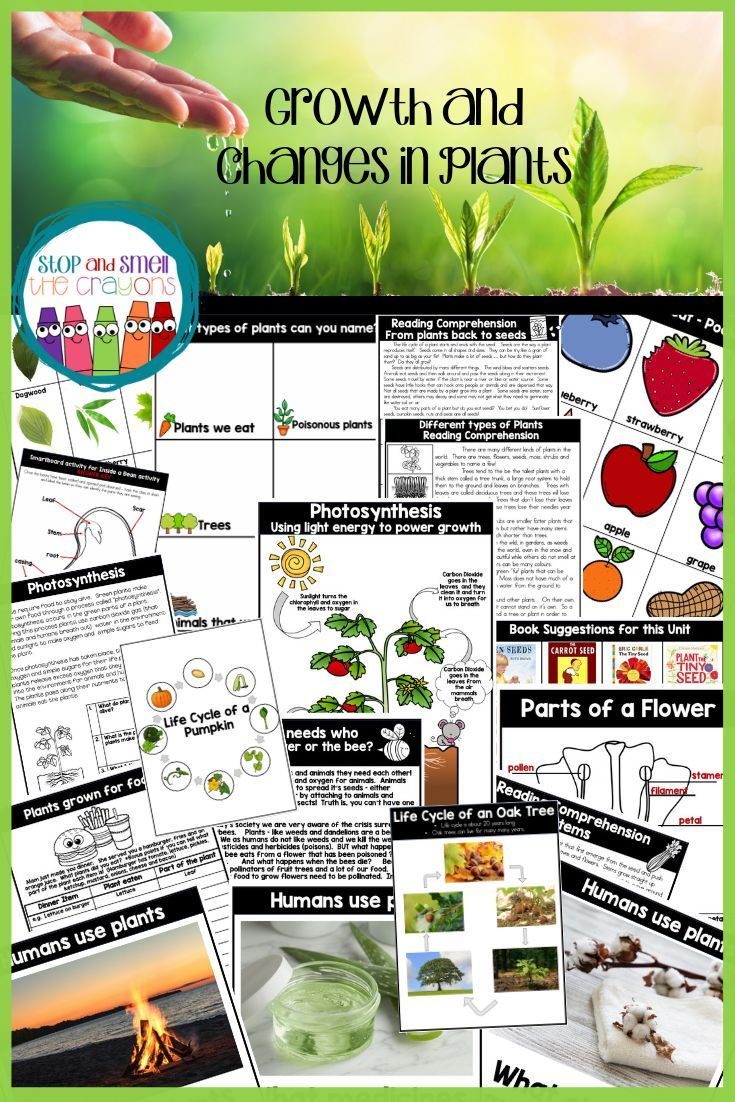 Growth and Changes in Plants unit This grade 3 science unit is 122 pages of  great value! It …   Grade 3 science [ 1102 x 735 Pixel ]