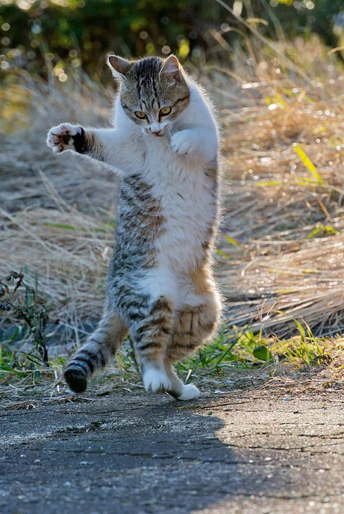 """After six hours of school I've had enough for the dayI hit the radio dial and turn it up all the wayI gotta dance (dance dance dance now the beat's really hot) right on the spot(dance dance dance right there on the spot)  chat-grain-de-folie:    Danse du chat…(suite)    """"Dance, Dance, Dance"""" lyrics by The Beach Boys"""