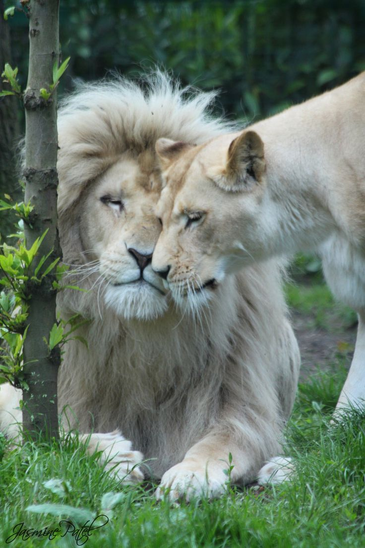 Such amazing animals, beautiful!