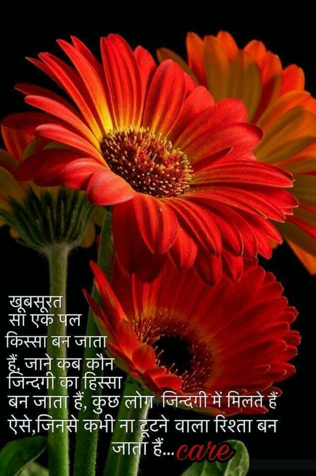 Pin By Pooja Mahle On Hindi Quotes Beautiful Flowers Plants Amazing Flowers