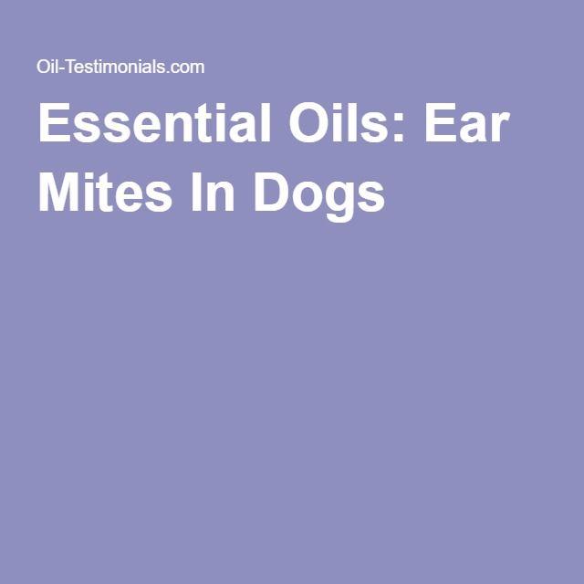 Sweet Oil For Dogs Ears