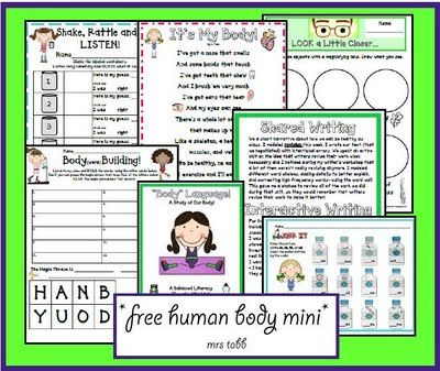 1st grade human body printable unit