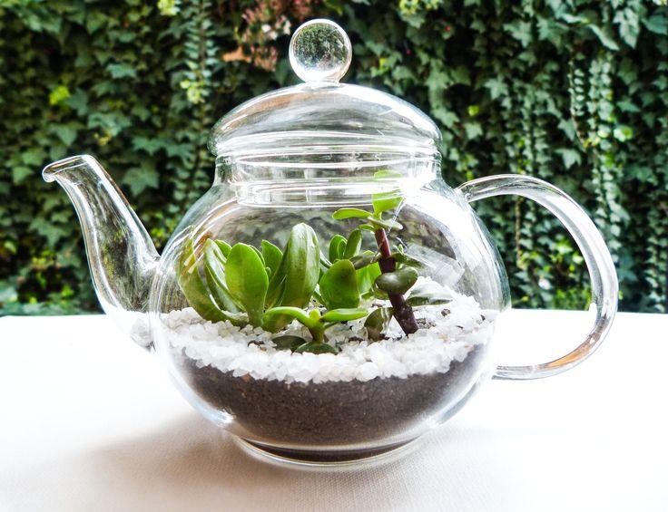 Terrario en tetera de cristal, con suculentas Sedum praealtum y Portulacaria afra, más cuarzo blanco. (diseño único)  Medidas: 12 x 16 cms.