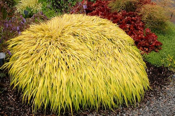 18 best images about ornamental grass on pinterest for Spiky ornamental grasses