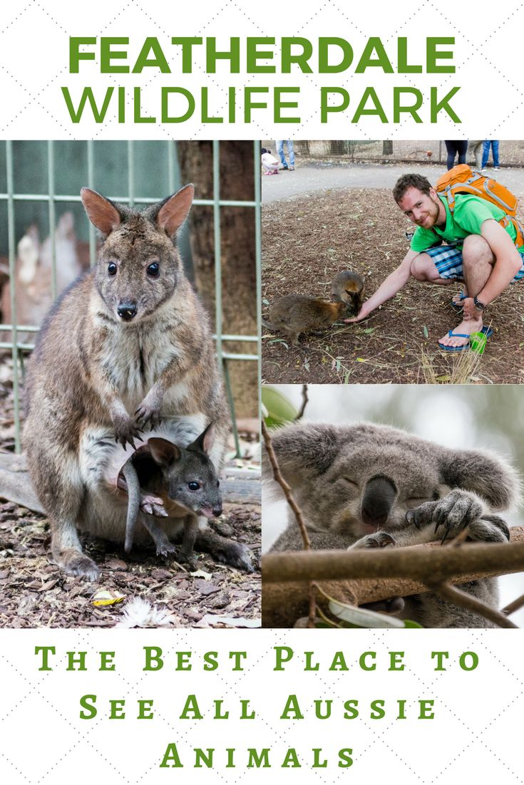 Reasons why Featherdale is the best zoo in Sydney. You shouldn't miss it during your visit in Sydney.