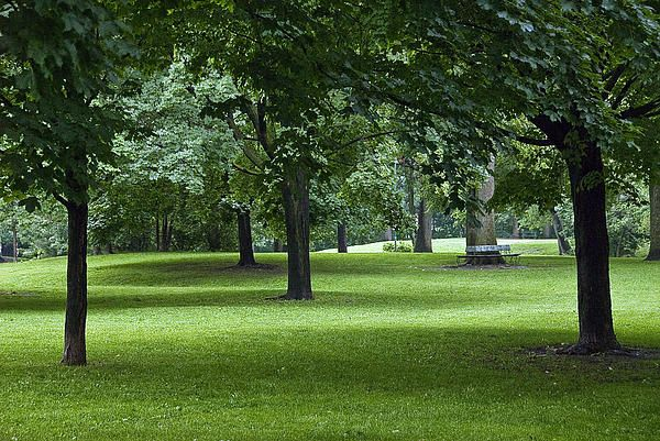 Walking by Monarch Park one overcast summer afternoon, I noticed how the soft light between the trees' shadows created a winding path that seemed to lead from the foreground to the background, past an old tree with a circular bench. #trees, #shadows